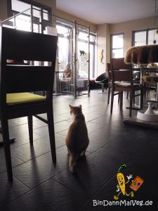 KatzeImCafe