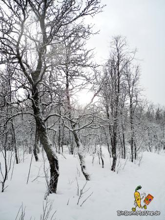 Schneebedeckte Bäume in Tromso